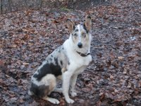 Dog sat in woodland with fallen leaves on the floor