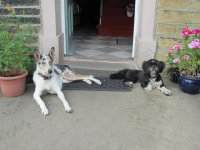 Dogs laying down in front of doorway to a house