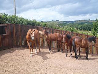 Equine Fencing Suffolk