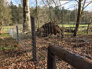 Fencing in Suffolk