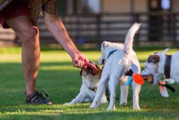 Working Dog Trials