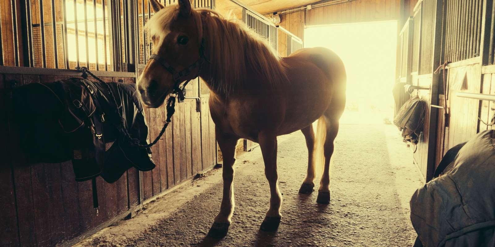 Contact Horse Riding Devon