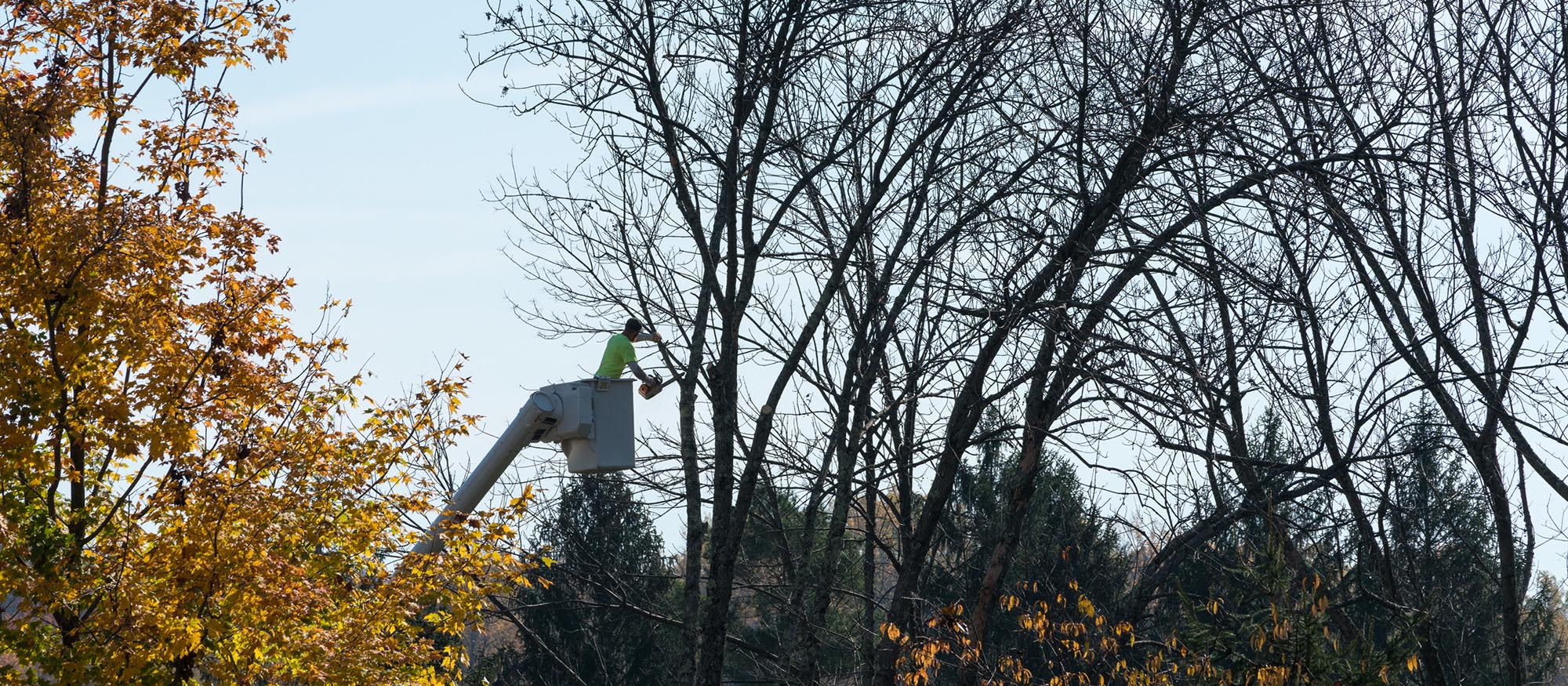 Tree Consultancy Service