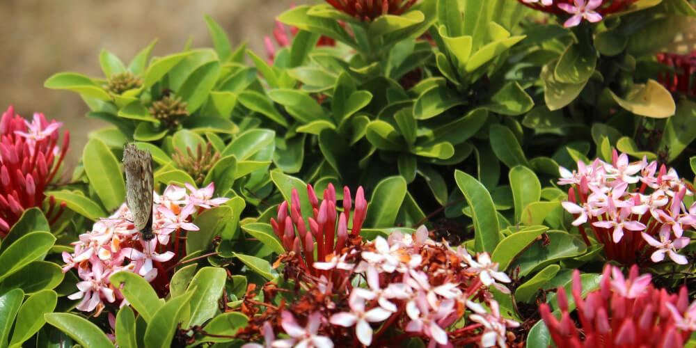 About Garden Maintenance