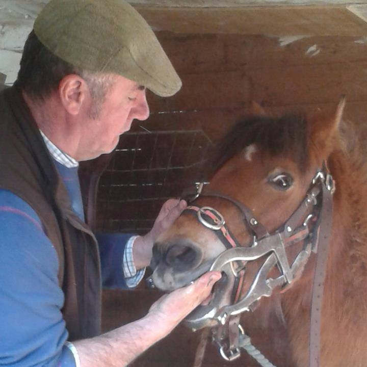 A manual teeth check on a horse