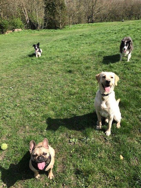 Dogs running in field