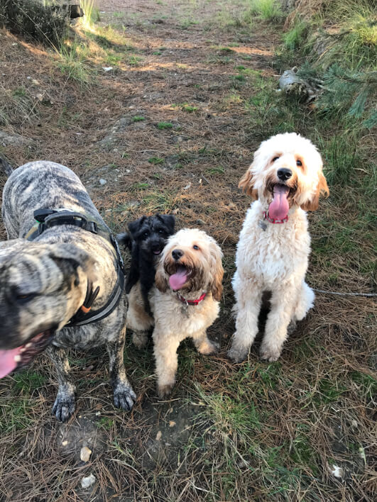 Collection of dogs in the woods
