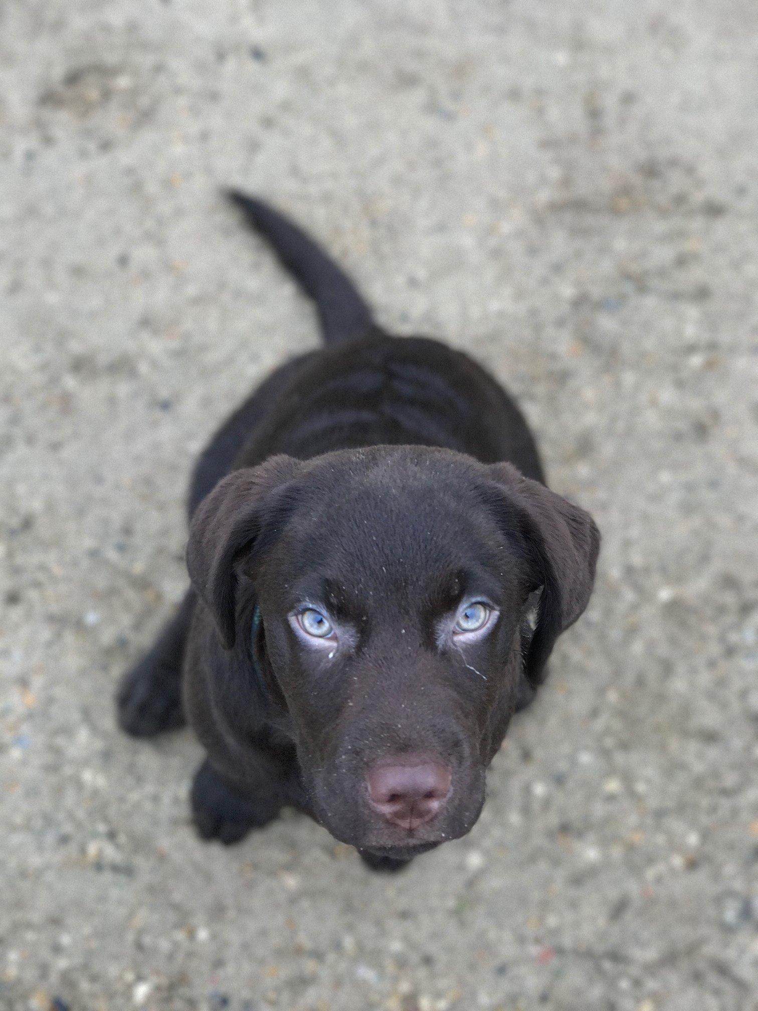 Brown dog looking up at camera