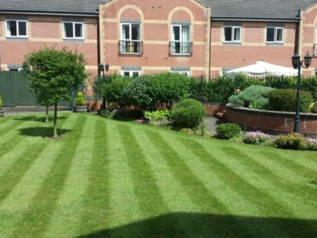 Professionally Cut Grass Surrounded by Shrubbery.