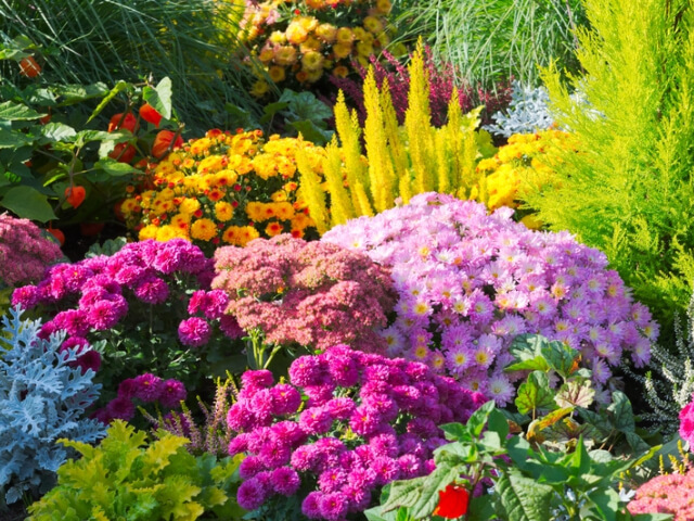 A Bunch of Colourful Flowers