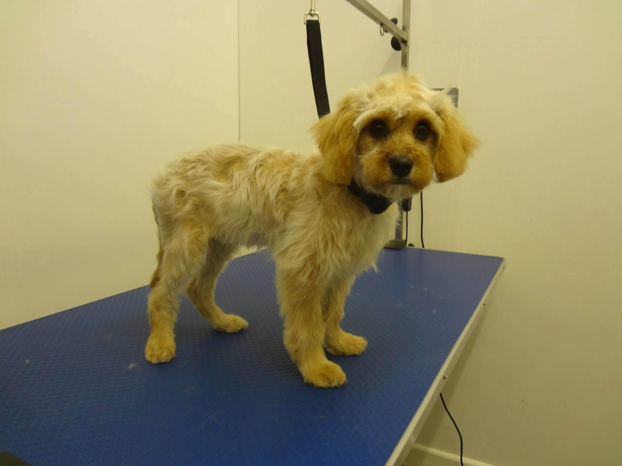 Freshly Groomed Dog