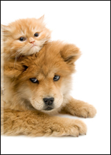 kitten laying on top of a puppy