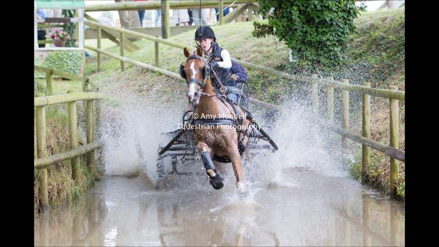 Horse running through water.