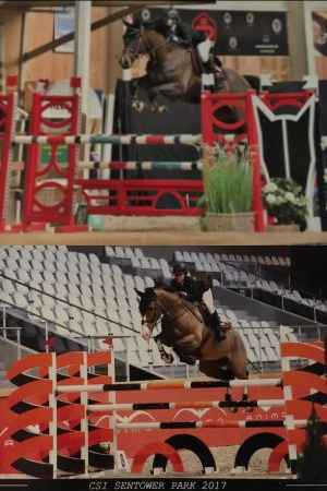 Collage of horse jumping over bars.