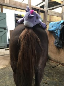 A horse with a stuffed animal on its back