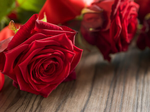 Funeral and mourning concept - red rose flower on wooden coffin.