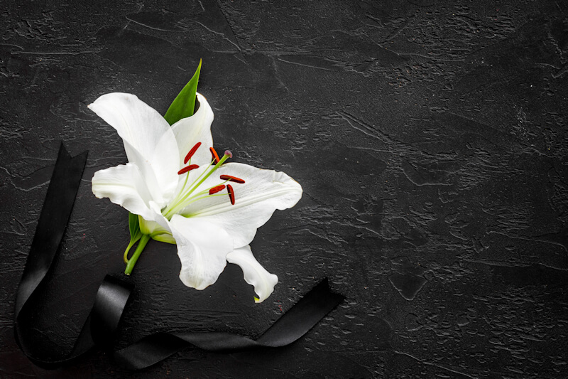 Funeral concept with lily and black ribbon