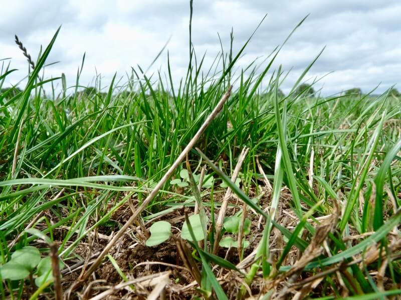 Close up photo of grass