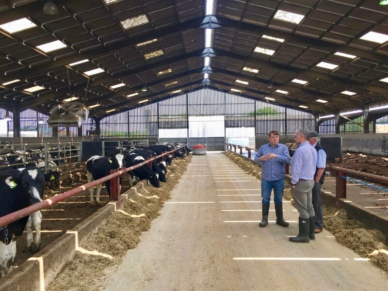 Farmers talking in cattle shed