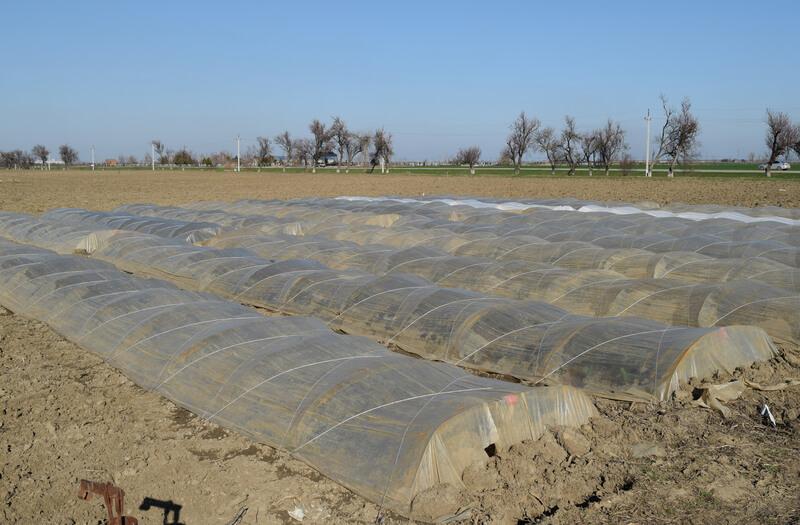 Polymer Farm