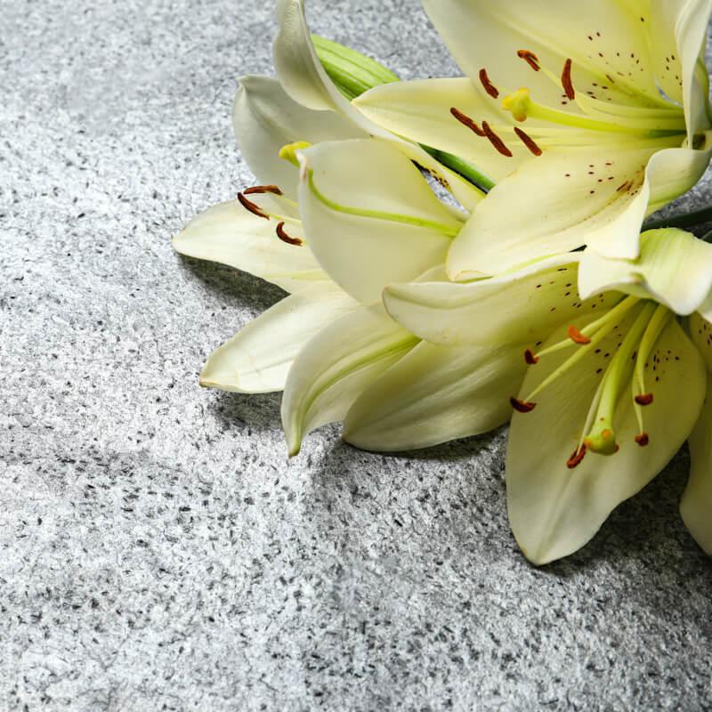 Beautiful lily flowers on grey stone background, closeup