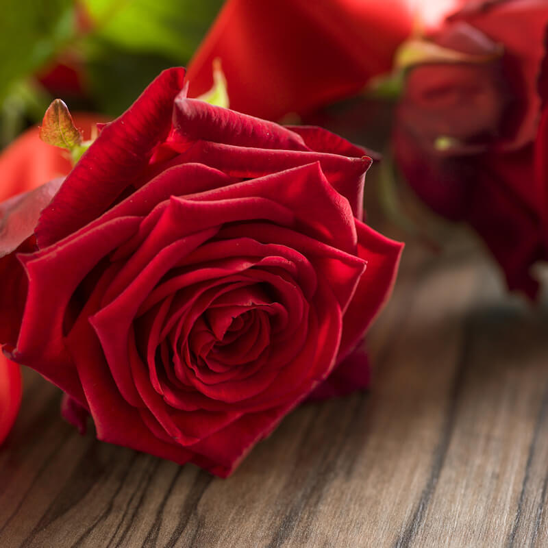 Funeral and mourning concept - close up of red rose flowers on wooden coffin