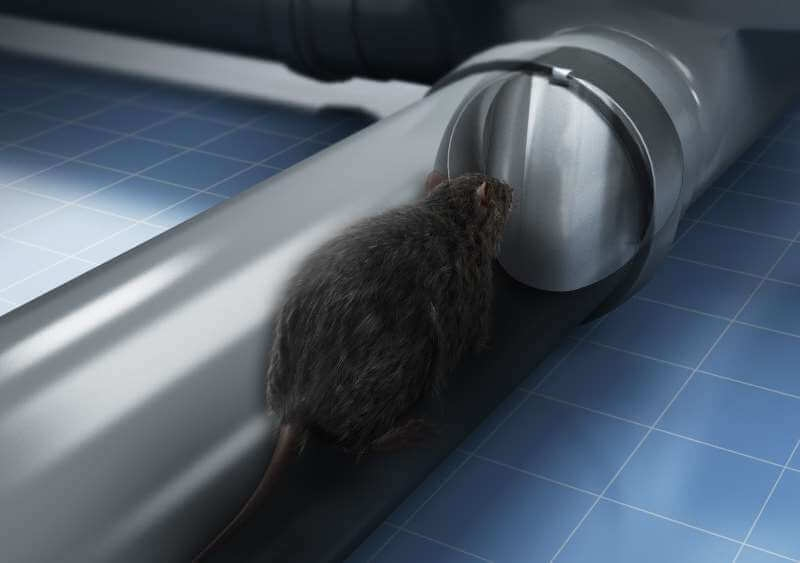 Conceptual image showing rat in drain