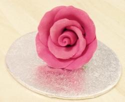 Fuschia 3.5cm Rosebud