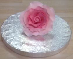 Shell Pink 7cm Rose