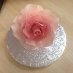 Large Rose Bud Baby Pink 9cm