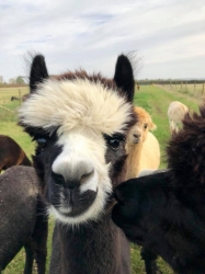 Alpaca Chat - Saturday 30th March 2019 11:30am