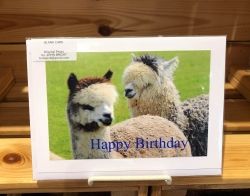 Hermes & Asha Birthday Card