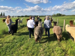 Alpaca Trekking Experience Voucher for 1 person