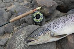 Salmon Fishing Lismore