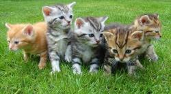Bunch of Kittens in a field