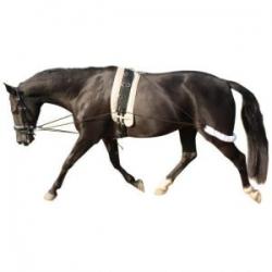 Black horse trotting.