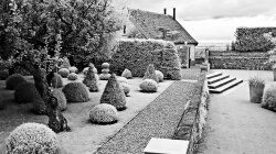Hedge sculpturing Infra Red