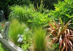 Soft Landscaping - Borders, Trees & Container Planting