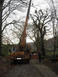 Tree removal along the B4300 Near Capel Dewi.