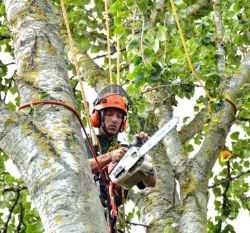 tree surgeon with chainsaw in tree