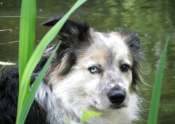 A one in a million dog, we shall miss him terribly, forever in our hearts xxx