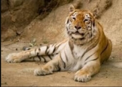 For the team here at Pets at Rest it really was an absolute privilege to care for Aysha on behalf of the Isle of Wight Zoo, who passed away at the grand old age of 21. Such a beauty xx