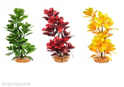 Komodo Boxwood Bush (3 colours available)