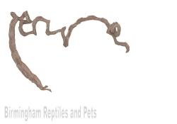 Lucky Reptile Liana