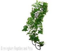 Komodo Philodendron Hanging Plant Large