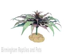 Komodo Star Cactus