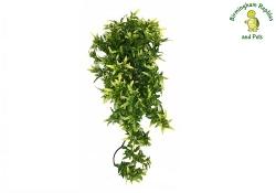 Komodo Croton Hanging Plant Medium