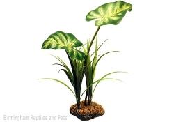 Komodo Broadleaf Canopy