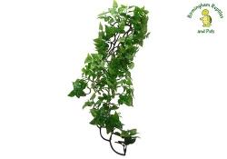 Komodo Philodendron Hanging Plant Medium