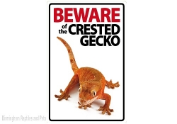 Beware of the Crested Gecko